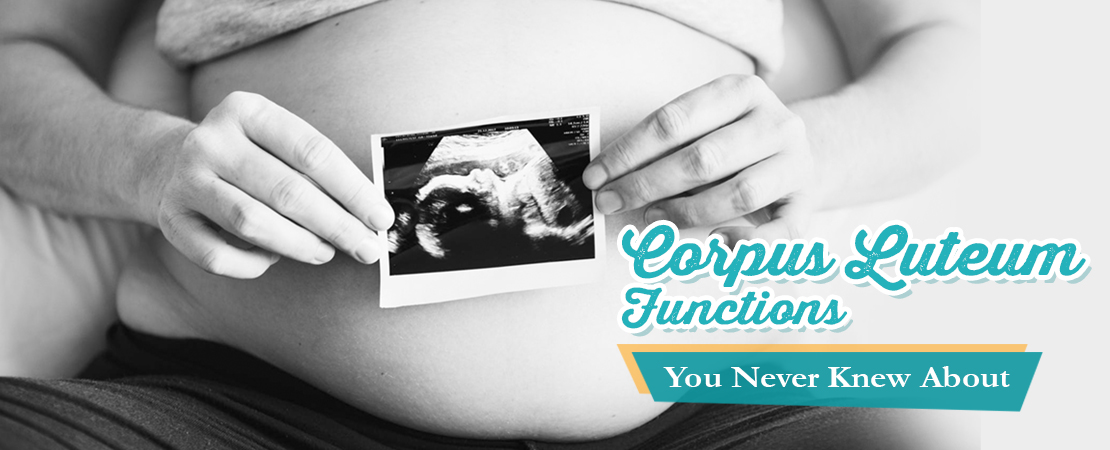 Corpus Luteum Functions You Never Knew About