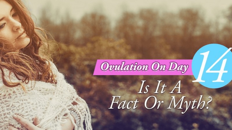Ovulation On Day 14 A Fact Or Myth